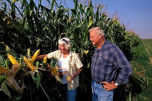 image 2-591-1 California, Delta, Staten Island, Couple in corn field