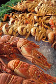 marketplace stock photography | California, San Francisco, Fresh crabs, Fisherman