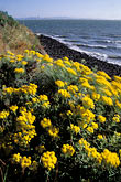 yellow stock photography | California, East Bay Parks, Brooks Island Regional Park, image id 6-169-14