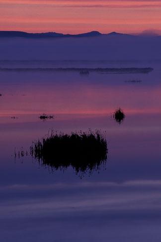 image 6-374-28 California, Marin County, Novato wetlands at dawn