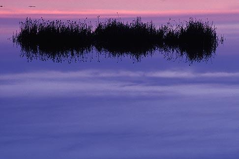 image 6-374-35 California, Marin County, Novato wetlands at dawn