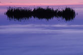 horizontal stock photography | California, Marin County, Novato wetlands at dawn, image id 6-374-35