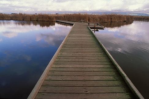 image 6-380-22 California, San Francisco Bay, Nature walk, Coyote Hills Regional Park