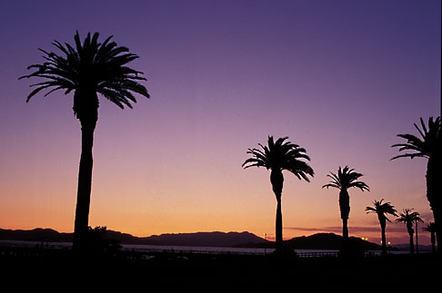 image 7-275-10 California, San Francisco Bay, Palms at sunset, Treasure Island