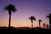 treasure stock photography | California, San Francisco Bay, Palms at sunset, Treasure Island, image id 7-275-10