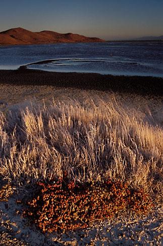 image 7-455-17 California, San Francisco Bay, Grasses and mudflats, Coyote Hills Reg Park