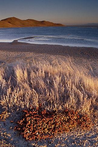 image 7-455-4 California, San Francisco Bay, Grasses and mudflats, Coyote Hills Reg Park