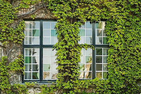 image 8-740-735 Belgium, Bruges, Window and Ivy