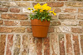 flowerbox stock photography | Belgium, Bruges, Flowerbox on brick wall, image id 8-740-912