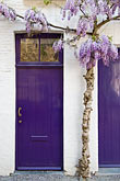 vertical stock photography | Belgium, Bruges, Painted doorways with lilac tree, image id 8-741-2100