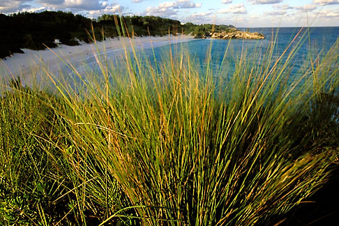 image 1-600-6 Bermuda, Horseshoe Bay, grasses