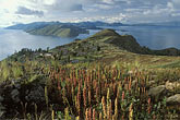 lakeside stock photography | Bolivia, Lake Titicaca, Quinoa field above Yumani, Isla del Sol, image id 3-103-32