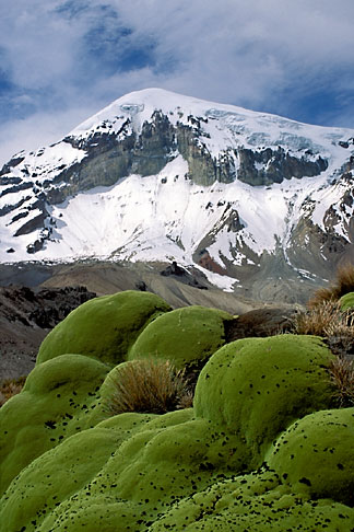 image 3-149-32 Bolivia, Sajama , Moss covered rocks beneath Sajama