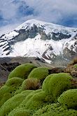 summit stock photography | Bolivia, Sajama , Moss-covered rocks beneath Sajama, image id 3-149-32