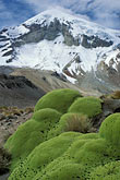 snow stock photography | Bolivia, Sajama , Moss-covered rocks beneath Sajama, image id 3-149-34