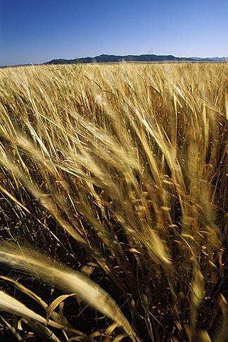 image 1-381-5 California, San Luis Obispo County, California Valley, field