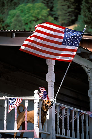image 1-640-70 Flags, Ameican Flags and balcony  with dog
