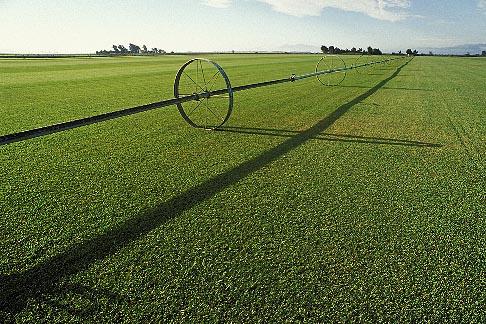 image 1-847-18 California, Solano County, Suisin, Irrigated turf farm