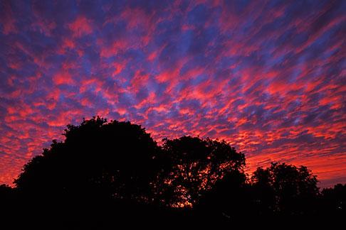 image 1-861-36 California, Marin County, Novato, Oaks at sunset