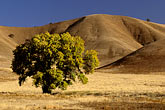 hillside stock photography | California, Contra Costa, Oak tree in early morning near Brentwood, image id 2-182-27