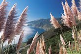 pampas grass stock photography | California, Big Sur, Pacific Ocean coastline near Lucia, image id 2-646-29