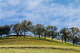 tree stock photography | California, Contra Costa, Hillside in early morning on Marsh Creek Road, image id 3-10-35