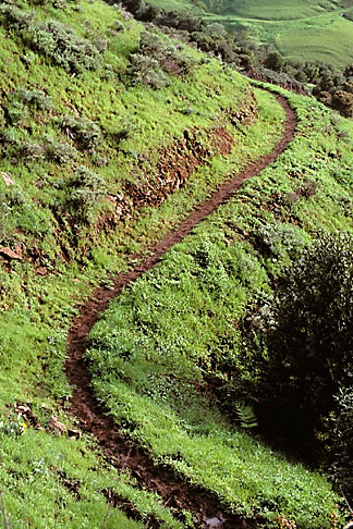 image 3-67-27 California, East Bay Parks, Bay Area Ridge Trail south of Tilden Park