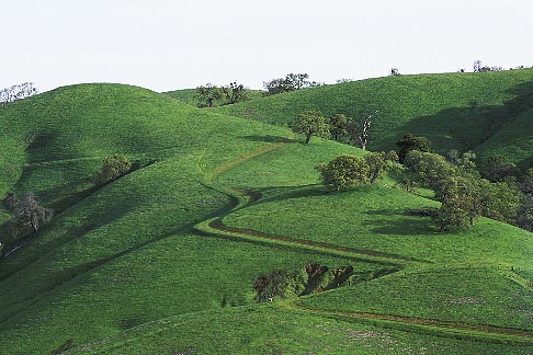 image 3-72-24 California, East Bay Parks, Hillside and Trail, Morgan Territory Reg Park