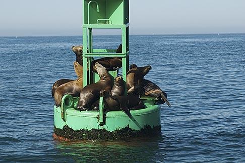 image 4-930-5432 California, Santa Barbara, Buoy, Santa Barbara Channel, with Sea Lions