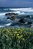 beach stock photography | California, Monterey, Beach and flowers, 17 Mile Drive, image id 5-207-10