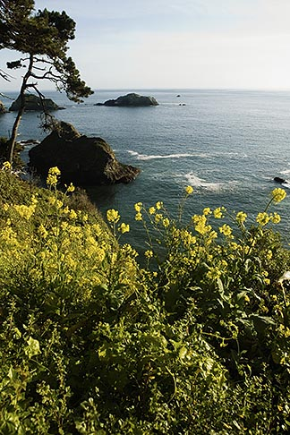 image 5-630-155 California, Mendocino County, Coastal bluffs, Elk
