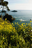 shoreline wildflowers stock photography | California, Mendocino County, Coastal bluffs, Elk, image id 5-630-155
