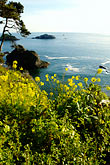 shoreline wildflowers stock photography | California, Mendocino County, Coastal bluffs, Elk, image id 5-630-156