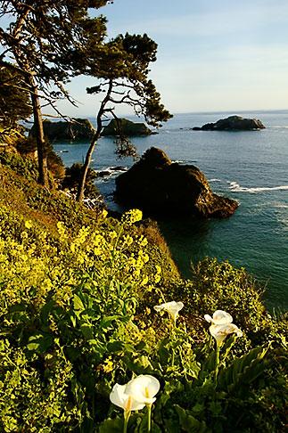 image 5-630-160 California, Mendocino County, Coastal bluffs, Elk
