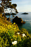 shoreline wildflowers stock photography | California, Mendocino County, Coastal bluffs, Elk, image id 5-630-160