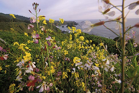 image 5-641-8 California, Mendocino County, Spring wildflowers near Elk