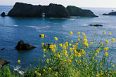 horizontal stock photography | California, Mendocino County, Elk, Mustard flowers and Arch Rock, image id 5-642-39