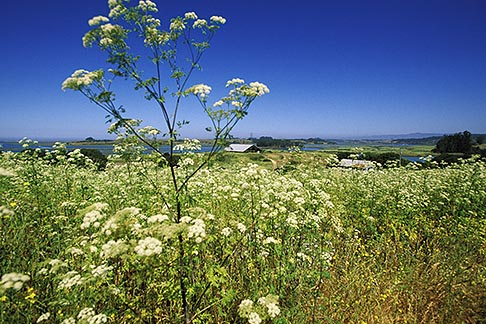 image 5-670-51 California, Moss Landing, Elkhorn Slough Reserve