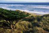 tree stock photography | California, Santa Cruz County, Pajaro Dunes, Beach and dune grass, image id 5-671-65