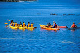 paddle boat stock photography | California, Moss Landing, Elkhorn Slough, Kayakers and sea otters, image id 5-672-56