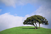 cloudy stock photography | California, Contra Costa, Oak tree, Alhambra Valley Road, image id 5-92-19