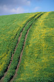 curve stock photography | California, Contra Costa, Mustard flowers on hillside, Antioch, image id 5-93-24