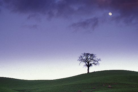 image 5-96-1 California, Contra Costa, Tree and full moon at dusk, Deer Valley Road