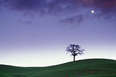 horizontal stock photography | California, Contra Costa, Tree and full moon at dusk, Deer Valley Road, image id 5-96-1