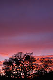 purple stock photography | California, East Bay Parks, Tree at sunset, Black Diamond Mines , image id 6-271-30