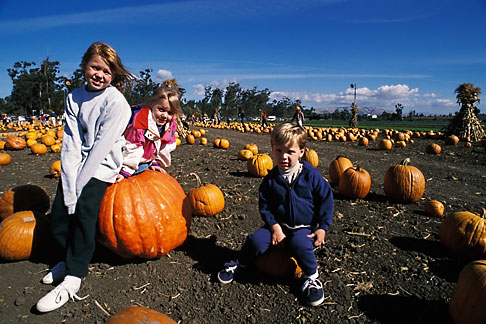 image 6-331-36 California, East Bay Parks, Pumpkin Farm near Ardenwood