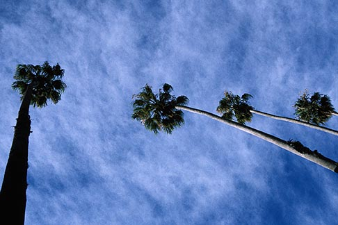 image 6-352-3 Trees, Palms and clouds