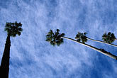 horizontal stock photography | Trees, Palms and clouds, image id 6-352-3