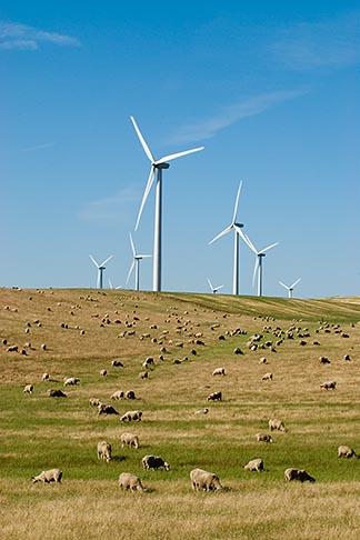 image 6-462-1350 California, Solano County, Wind Turbines on hillside
