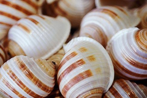image 6-472-15 California, Morro Bay, Seashells